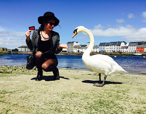Swans At Cladddagh Galway